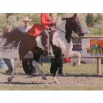 Beautiful Black and White Gelding, has been showed in Speed Racking and can FLY. Sired by Marshall Dillion. Beautiful head and neck. Won a lot in racking country pleasure and Ladies racking. Could not ask for a better trail horse with heart!